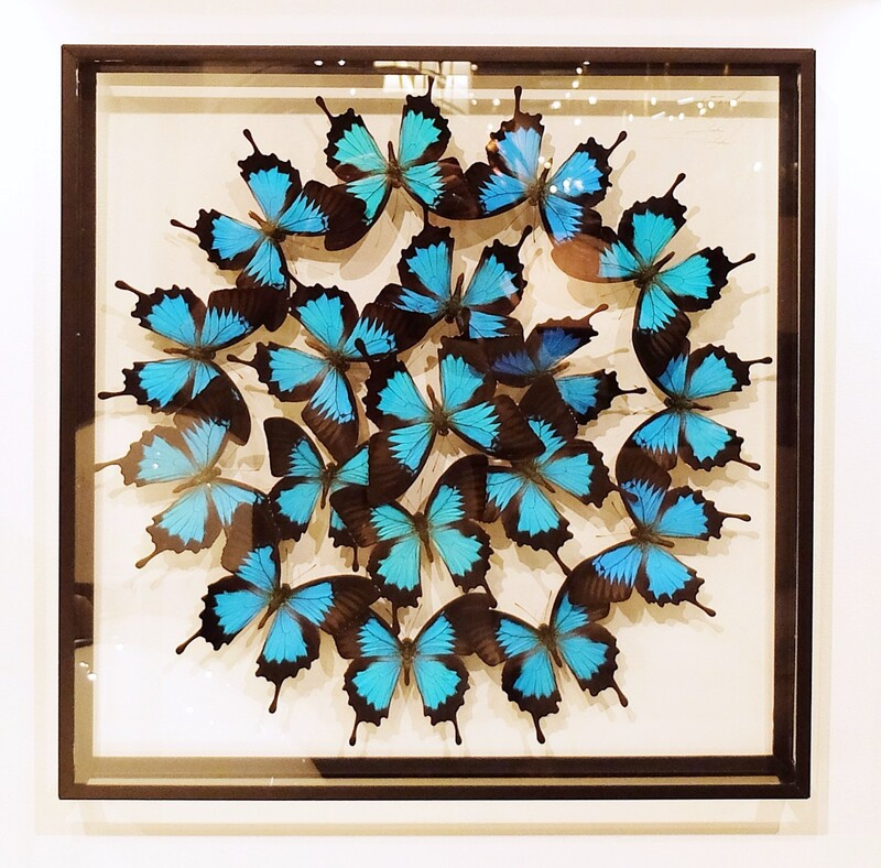 Luminous Composition of Framed Butterflies by Olivier Violo