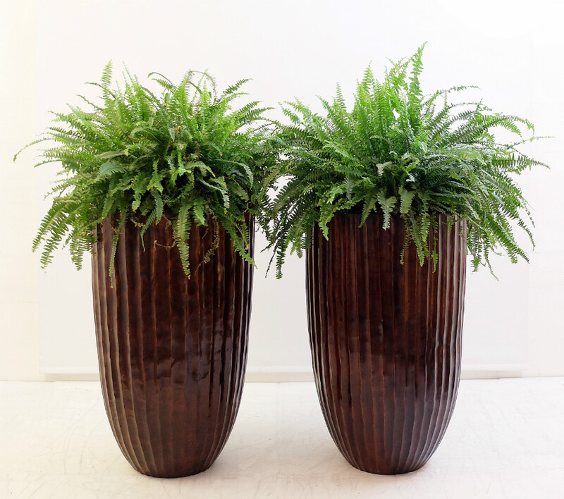 Pair of planter - exotic wood