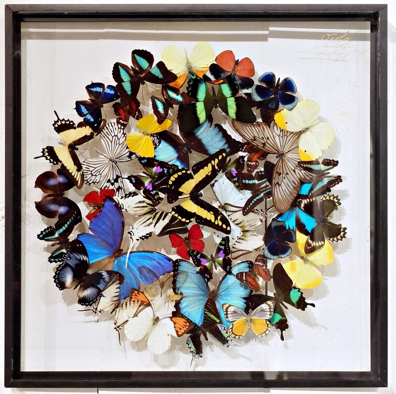 Stunning Colourful Composition Of Framed Butterflies By Olivier Violo